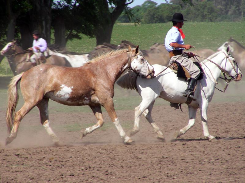 Pampas - Fiesta Gaucha