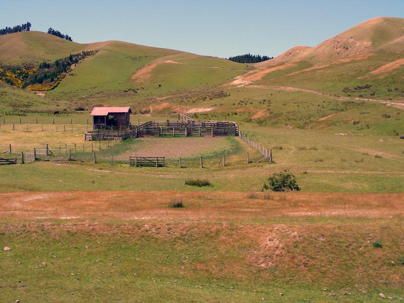 Farm - New Zealand - South Island